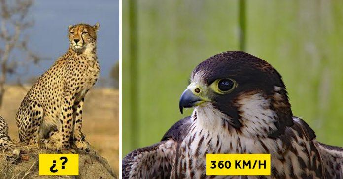 El Ranking De Los 10 Animales Más Rápidos Del Mundo Que Pueden Llegar A Correr Más Que Un Coche